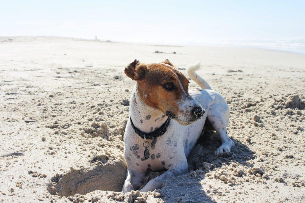 strandhuisje met hond