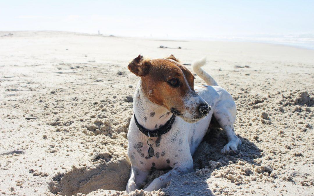 Strandhuisjes met hond, waar ook de viervoeter welkom is
